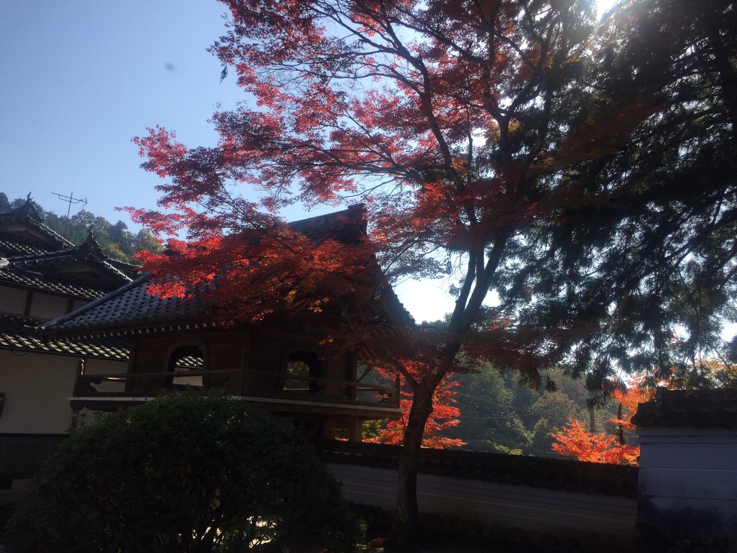 ①醍醐寺.jpg