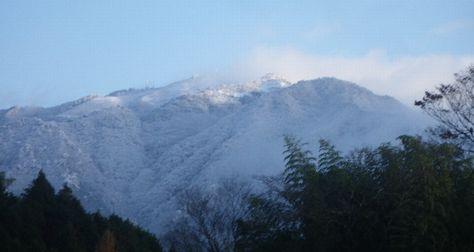 初冠雪2.jpg